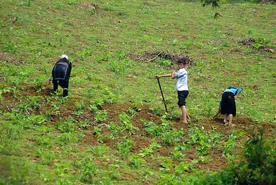 © Joseph Dougherty. All rights reserved.   Black H'mong family tending their hillside farm plot in the Muong Hoa Valley.