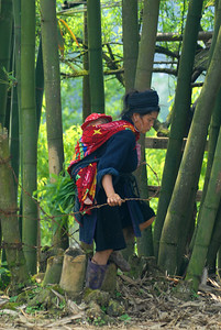 © Joseph Dougherty. All rights reserved.   Black H'mong woman passing through a barbed fence in giant bamboo, with baby on her back.