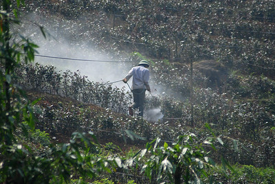 © Joseph Dougherty. All rights reserved.   Farmer spraying pesticides on his plants.