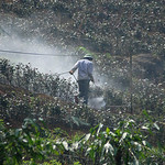 � Joseph Dougherty. All rights reserved.  Farmer spraying pesticides on his plants.