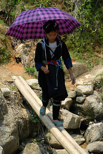 Young Hmong woman crossing a bamboo foot-bridge alond the trail through the rice paddies.