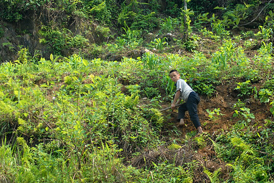 © Joseph Dougherty. All rights reserved.   Young boy tending the family's hillside farm plot in the Muong Hoa Valley.