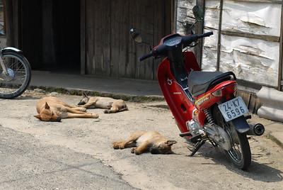 Dog and puppies resting outside a home in Sapa.