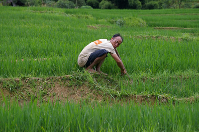 SaPa Man in field.