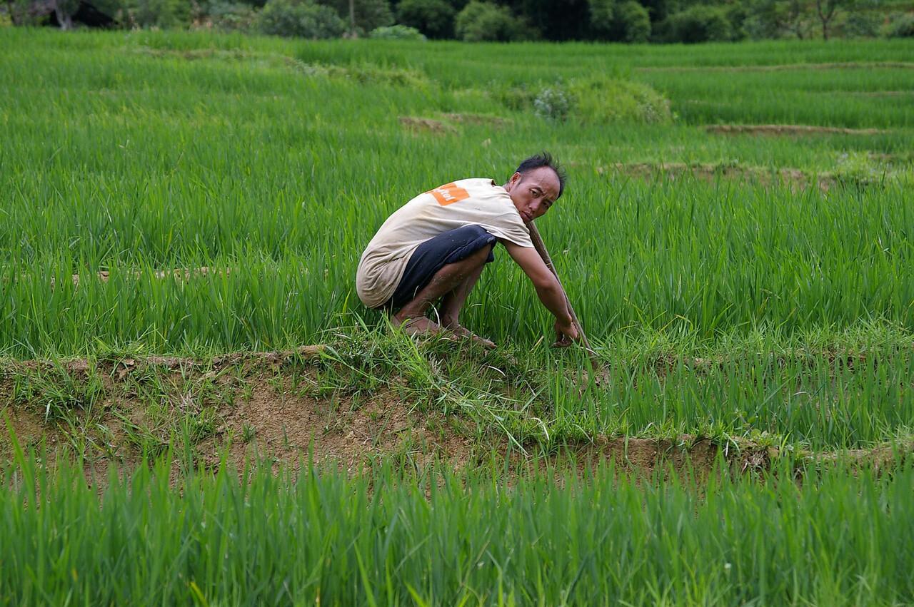 SaPa Man in field.
