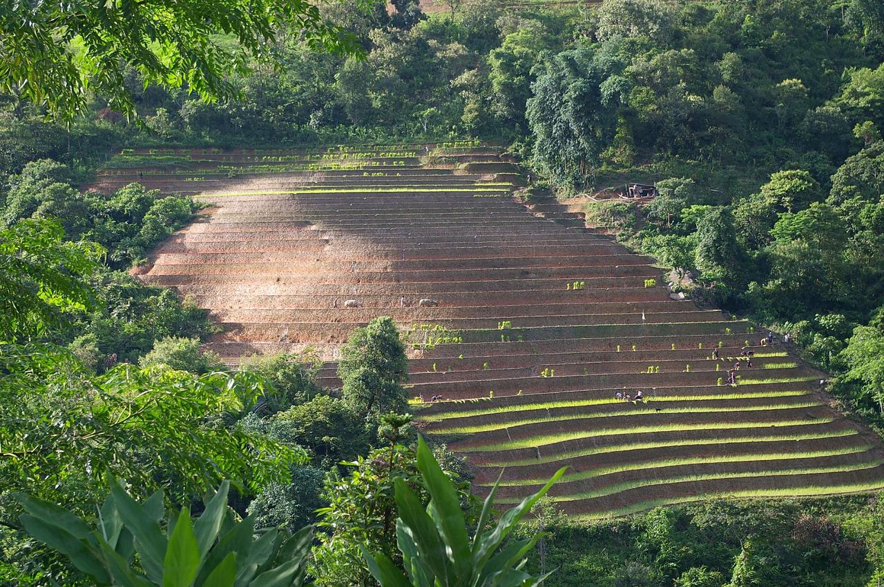 SaPa rice terraces.