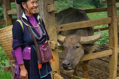 SaPa woman with ox.