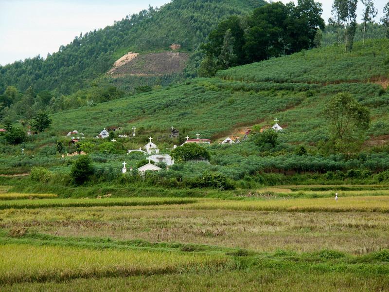 Cemetary across the rice fields.