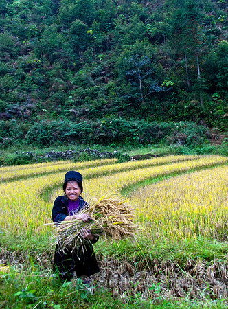 Black H'mong woman with rice harvest