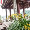 Hanoi, Ngoc Soc Temple (Jade Mtn) (12 of 36)