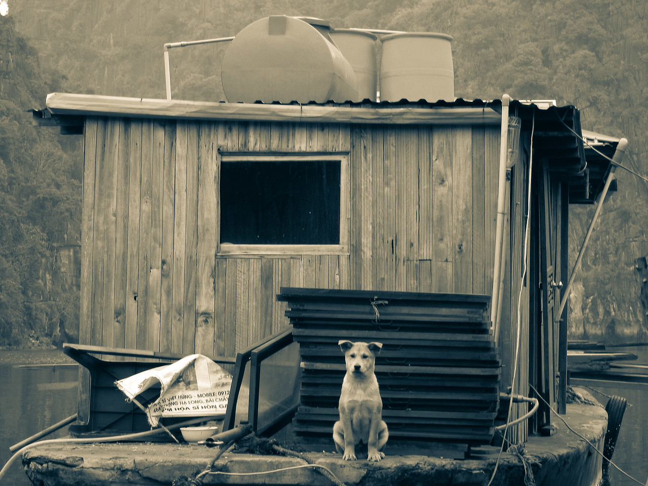 'Dog Rules' - A dog living in the floating village in Ha Long Bay, Vietnam