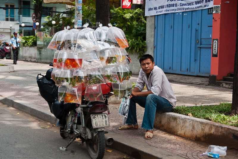 A man sells live fish, eels, and turtles on the street.
