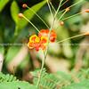 Delicate orange colored flower, unidentified.