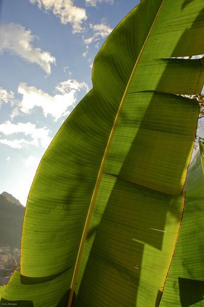 Banana Leaf<br /> Sapa, N. Vietnam