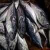 Fish in the market in Cat Ba