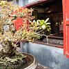 Hanoi, Ngoc Soc Temple (Jade Mtn) (34 of 36)
