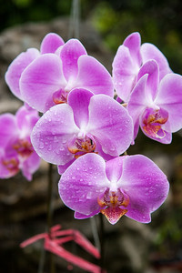 Orchids near the Mekong river