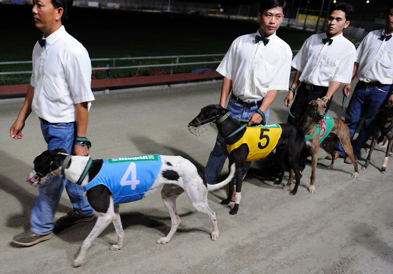 That night we hit up the Dog Races, and put serious money, well ok a few dollars at least, on our favourite pooches...