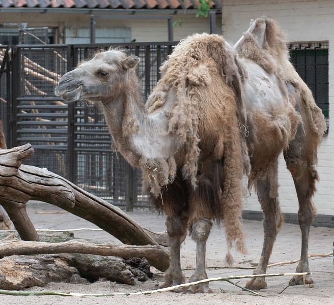 Location - Artis Zoo in Amsterdam
