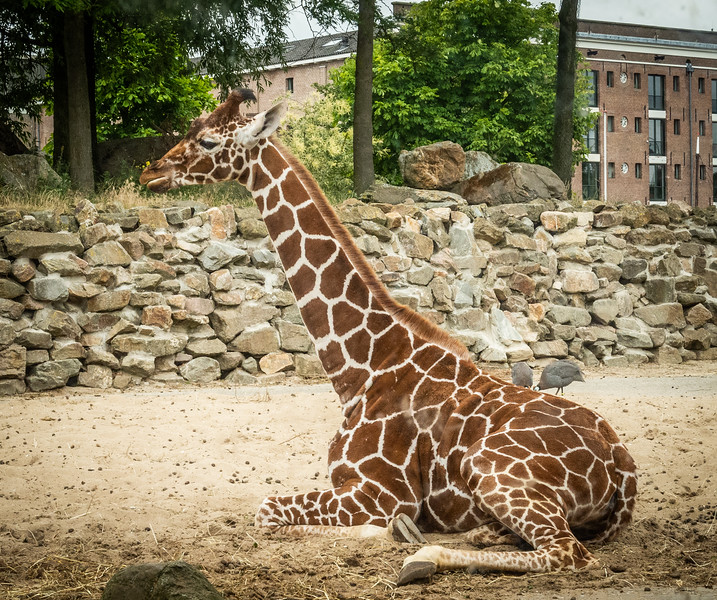 Location - Artis Zoo in Amsterdam