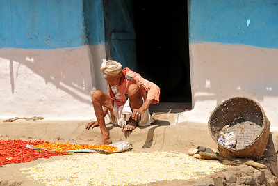 Drying grain outside the house. Villages in rural India in the state of Maharashtra.