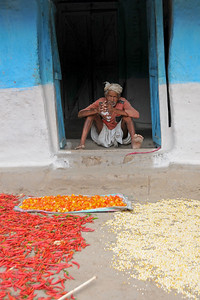 Drying chillies in open Sun. Villages in rural India in the state of Maharashtra.