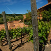 No wasted space in wine country. Jacuzzi vineyards, Sonoma, CA.