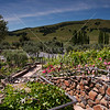 Beautiful gardens at Jacuzzi Vineyard.