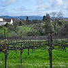February in Wine country.