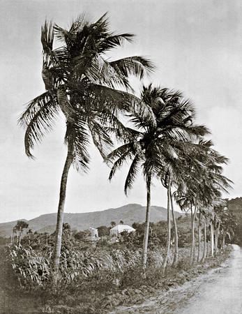 Historic Virgin Islands & Danish West Indian Photographs, Maps & Plans