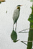 Virginia-Victoria- June 2006 318
