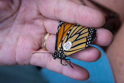 BJ's Monarch