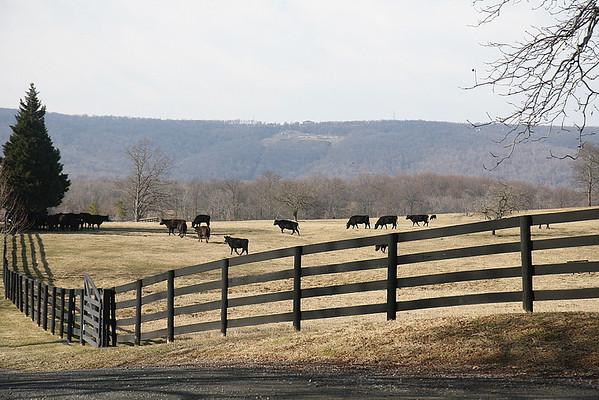 Virginia January 2008