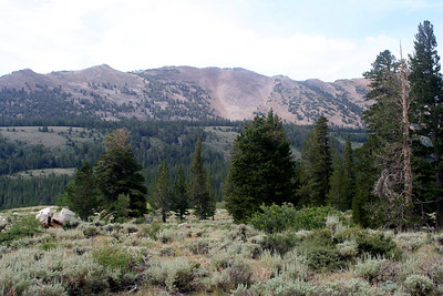 7/10/07 View off Virginia Lakes Rd.,Toiyabe National Forest, Eastern Sierras, Mono County, CA