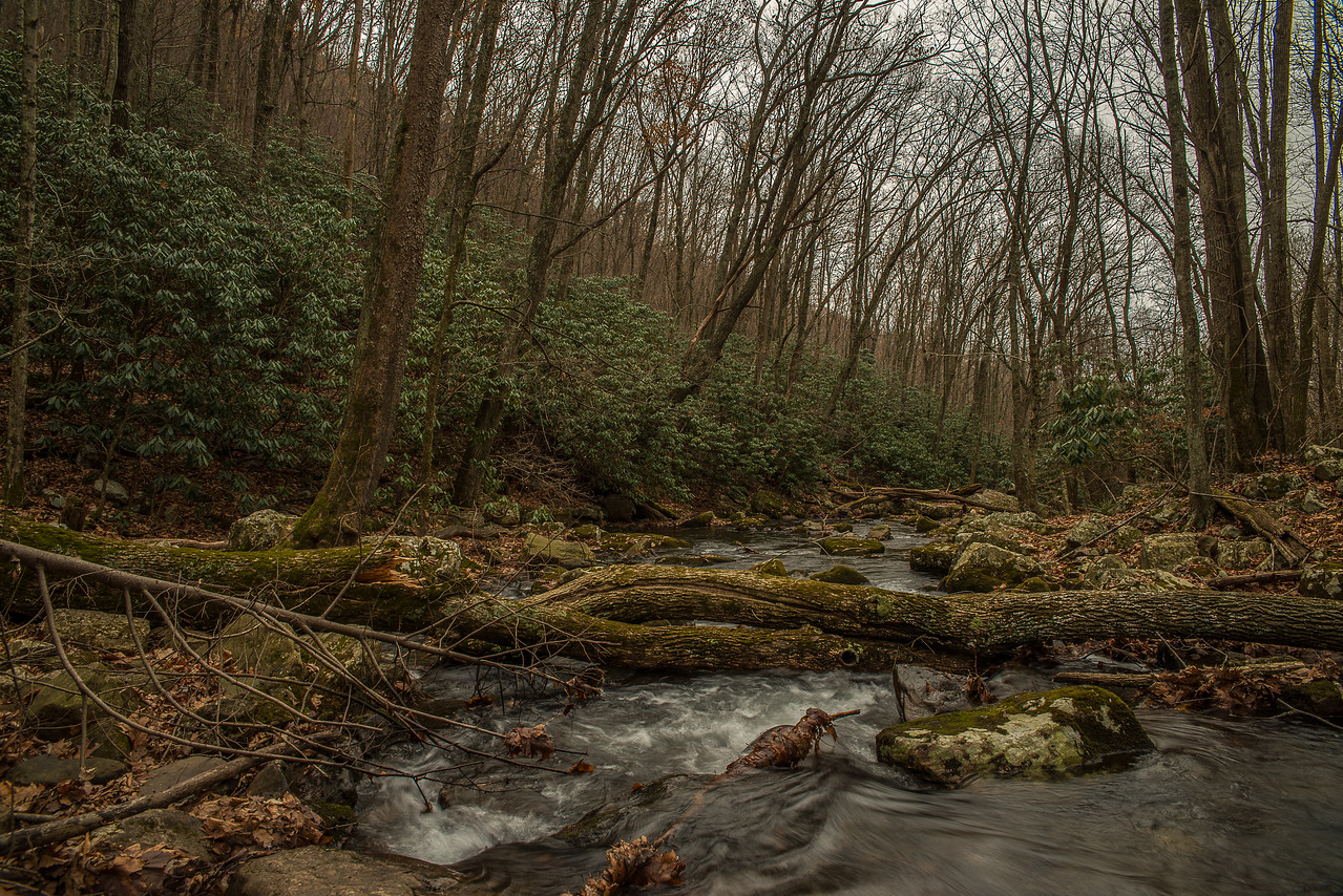 Little Stony Creek filled with boulders and rushing water, lined with wild Rhododendrons.