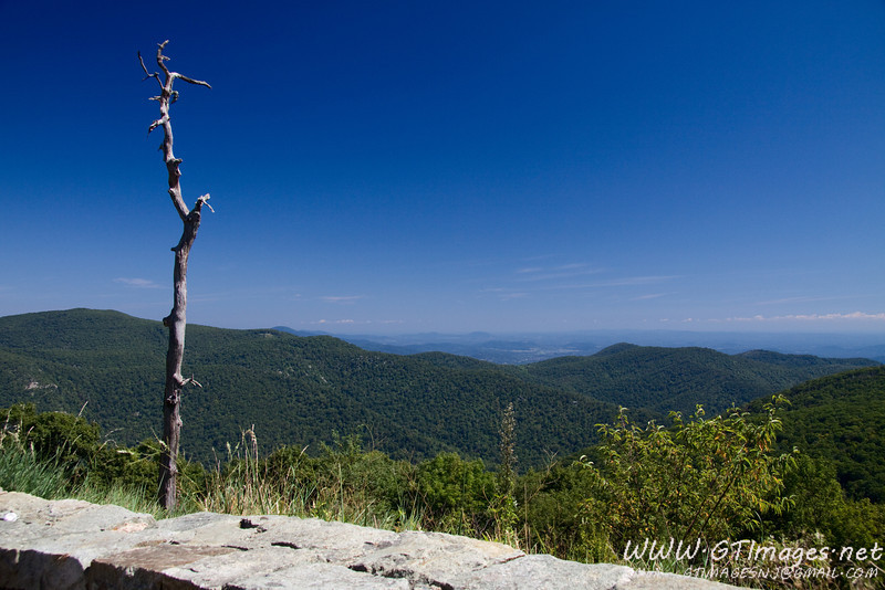 More from Skyline Drive...