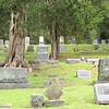 """Notice Large Cedar Trees - Gravestone for Powell - Cedar Hill Cemetery (1802) - Town of Suffolk, VA  4-9-11<br /> Originally constructed as """"Green Hill Cemetery,"""" this 32 acre expanse of hilly terrain and ancient cedar trees has many stories to reveal."""