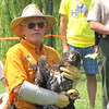 Release #1 - An Immature Eagle - Berkeley Plantation, Charles City, Virginia  7-27-11<br /> As you can see, they are huge birds and it's obvious why the handlers wear very thick elbow-length gloves.  Eagles feed their young by shredding pieces of meat from their prey with their beaks.