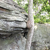Tree Growing Into Rock - Greenstone Overlook - Milepost 9 Blue Ridge Parkway  9-3-10