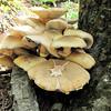 Looks Like a Bug Imprint on the Large Mushroom - Greenstone Overlook Trail - Milepost 9 Blue Ridge Parkway  9-3-10