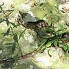Plants Growing in a Crack of the Rocks - Greenstone Overlook Trail - Milepost 9 Blue Ridge Parkway  9-3-10