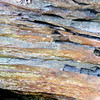 Colors of a Rock on Greenstone Overlook Trail - Milepost 9 Blue Ridge Parkway  9-3-10