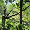 Dead Tree Looks Like a Prayiing Mantis Standing Tall - Greenstone Overlook Trail - Milepost 9 Blue Ridge Parkway  9-3-10