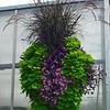 Flower and Grass Arrangement at Milmont Nursery