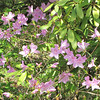Blooms - Boxerwood Nature Center and Woodland Gardens, Lexington, VA