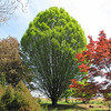 Beautifully Shaped Tree - Boxerwood Nature Center and Woodland Gardens, Lexington, VA
