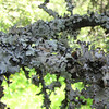 Lichens Growing on Dead Branch - Boxerwood Nature Center and Woodland Gardens, Lexington, VA