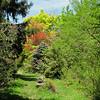 Wandering the Woodlands at Boxerwood Nature Center and Woodland Gardens, Lexington, VA