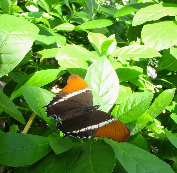 Butterfly Exhibit at Lewis Ginter Botanical Gardens - Richmond, VA