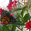 Butterfly Exhibit at Lewis Ginter Botanical Gardens - Richmond, VA